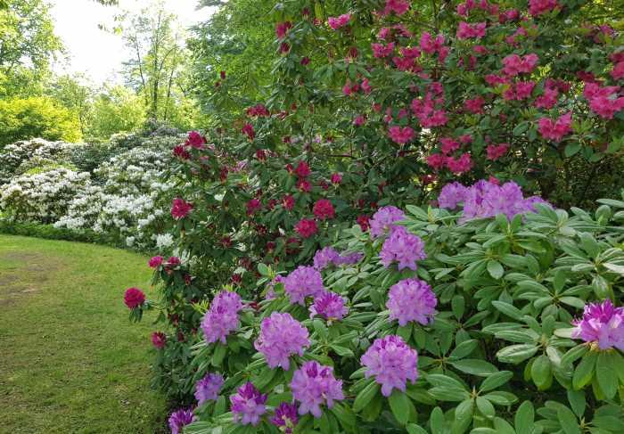 Lichtenrade Berlin De Britzer Garten Zauberbluten Im Rhododendronhain